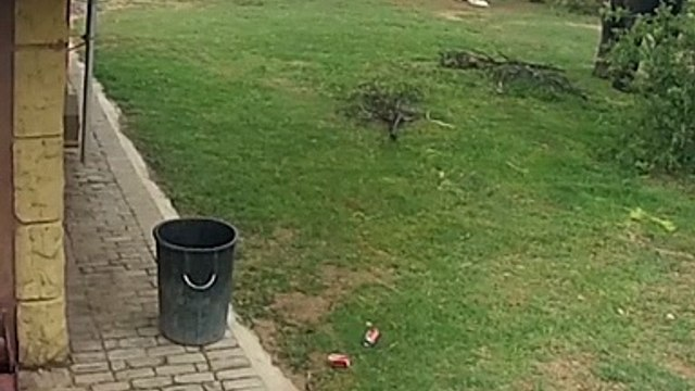 An elephant collecting garbage from the garden's floor