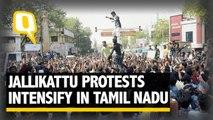 The Quint: Tamil Nadu CM Meets PM Modi, Demands Ordinance on Jallikattu