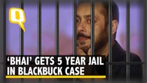 Tiger Guilty Hai: Salman Khan Gets 5 Years in Blackbuck Case | The Quint