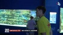 Aquarium de La Rochelle : 40 nouvelles recrues pour la période estivale