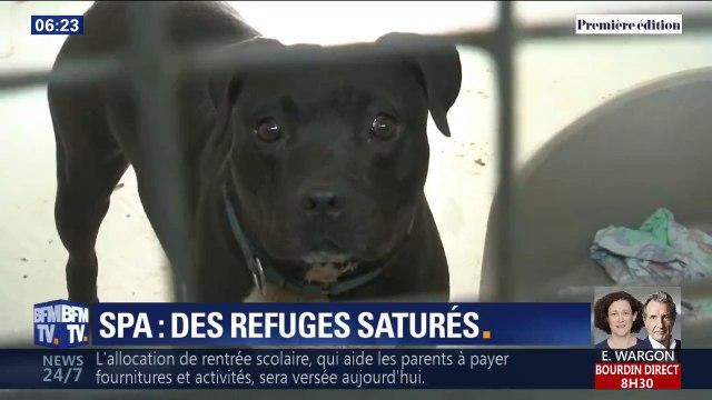 Tandis que chats et chiens continuent d'être abandonnés, les SPA arrivent à saturation