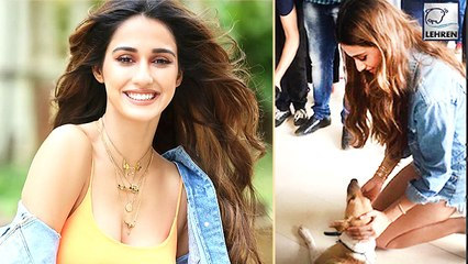 Disha Patani At The Launch Of Tiktok's New Animal Welfare Campaign