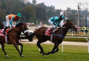 A racehorse's career