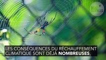 Réchauffement climatique : l'étonnante raison qui rend les araignées plus agressives