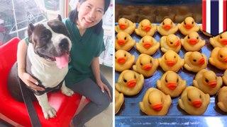 Dokter temukan 32 bebek karet dalam perut anjing ini - TomoNews