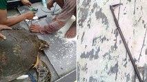 Harpunierte Schildkröte wird von Fischern gerettet