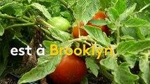 Les fermes urbaines, une agriculture d'avenir