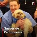 Magnifique programme de sauvetage des animaux et de réinsertion des prisonniers. Admirez !