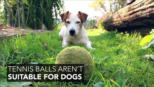 5 Toys That Are Dangerous For Your Dog