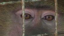 Video: Nigerian vet houses rescued animals