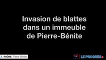 Invasion de blattes à Pierre Bénite