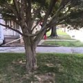 Kid in Superhero Costume Drops Hilariously From Tree Branch