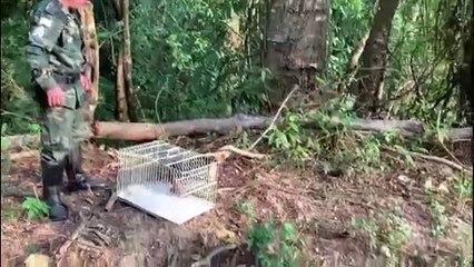 Tamanduá é resgatado em Cachoeiro