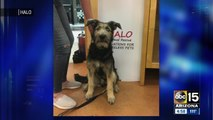 Dog cast as Tramp in Disney remake was adopted in Arizona