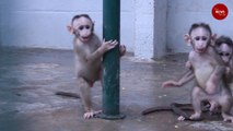 From snakes to monkeys: This Bengaluru shelter houses sick and injured urban wild animals