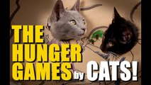 CATS remake HUNGER GAMES with Cardboard-