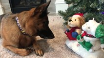Dog Gets Confused by Beep Sound Coming from Christmas Toy