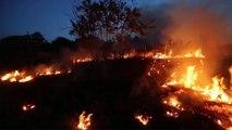 Amazon rainforest ravaged by deforestation fires in Brazil