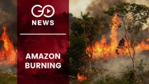 Amazon Rainforest Up In Flames
