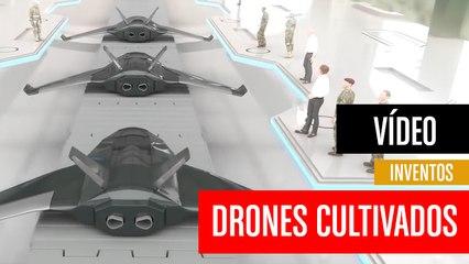 [CH] Drones cultivados en laboratorio