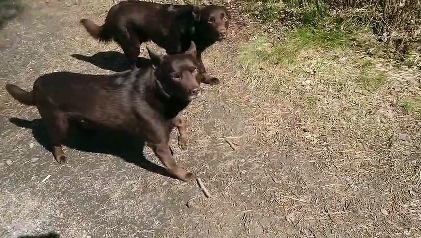 Two Tense Dogs
