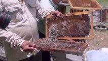 Muerte masiva de abejas en comunidad Maya | Especiales Milenio
