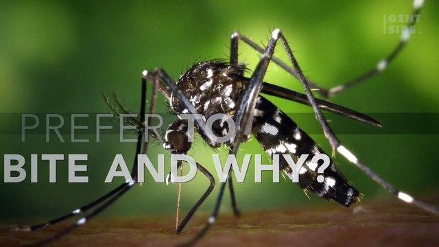 Who do mosquitos prefer to bite and why?
