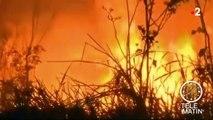 Au Brésil, les incendies ravagent la forêt amazonienne