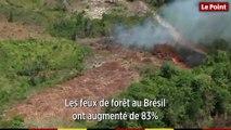Incendies dans la forêt amazonienne : une ampleur inédite