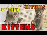 Kittens, Kittens and Kittens- Episode 6