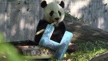 Eine bittersüße Geburtstagsparty für einen Panda
