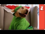 Mariah Carey - All I Want For Christmas Is You (Dog Parody)