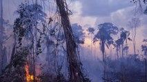 Camila Cabello and Ariana Grande turn social media influencers to highlight rainforest fire story