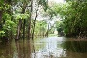 Tout savoir sur l'Amazonie