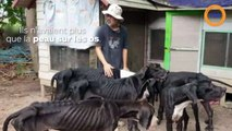 Des chiens squelettiques adoptés par le roi de Thailande !