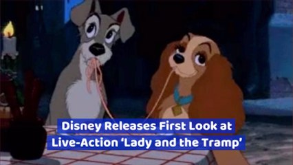 The 'Lady And The Tramp' Live-Action Remake