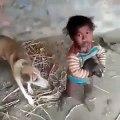 Cette brave chienne reprend son petit des mains d'un enfant têtu. Trop marrant !