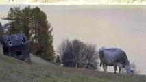 Truffa a Ue per fondi all'agricoltura, 91 indagati in Nord Italia