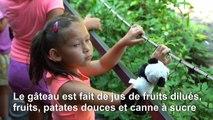 Le panda Bei Bei fête son 4ème anniversaire au zoo de Washington