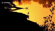 Straight out of Lion King: Beautiful silhouette of open-billed stork in South African national park