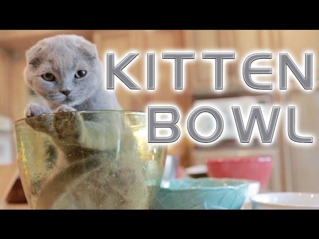 Kitten Bowl 2014