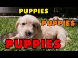 Puppies, Puppies and Puppies - Episode 2