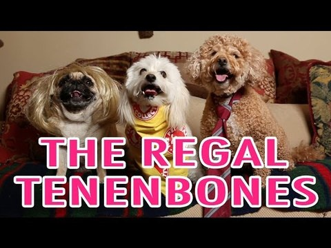 Wes Anderson's The Royal Tenenbaums Pet Parody