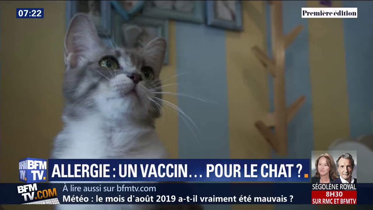 Et si un vaccin pouvait lutter contre les allergies au chat ?