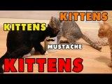 Kittens, Kittens and Kittens - Episode 4
