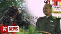 PM: Unfair to link palm oil to deforestation