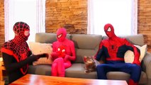 Frozen Elsa & Spiderman, Exciting events of cute cats