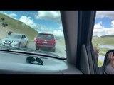 Aggressive Bison Rams Horn into SUV Door