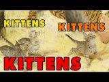 Kittens, Kittens and Kittens- - Episode 5