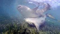 Dry Tortugas: Die Top Dating Plattform für Haie